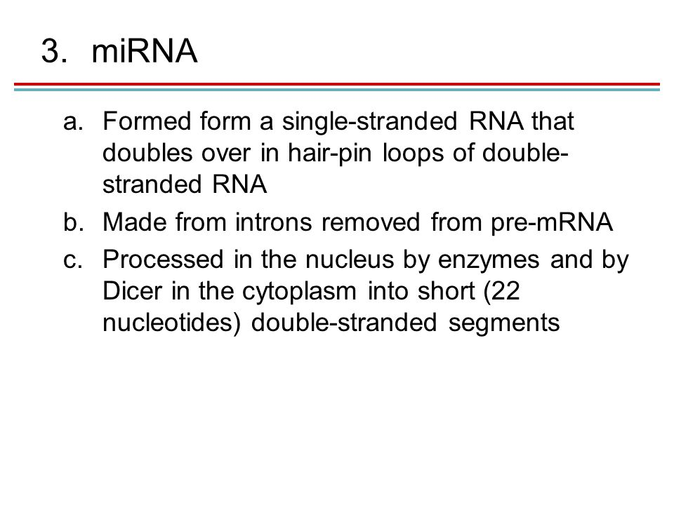 3.miRNA a.Formed form a single-stranded RNA that doubles over in hair-pin loops of double- stranded RNA b.Made from introns removed from pre-mRNA c.Processed in the nucleus by enzymes and by Dicer in the cytoplasm into short (22 nucleotides) double-stranded segments