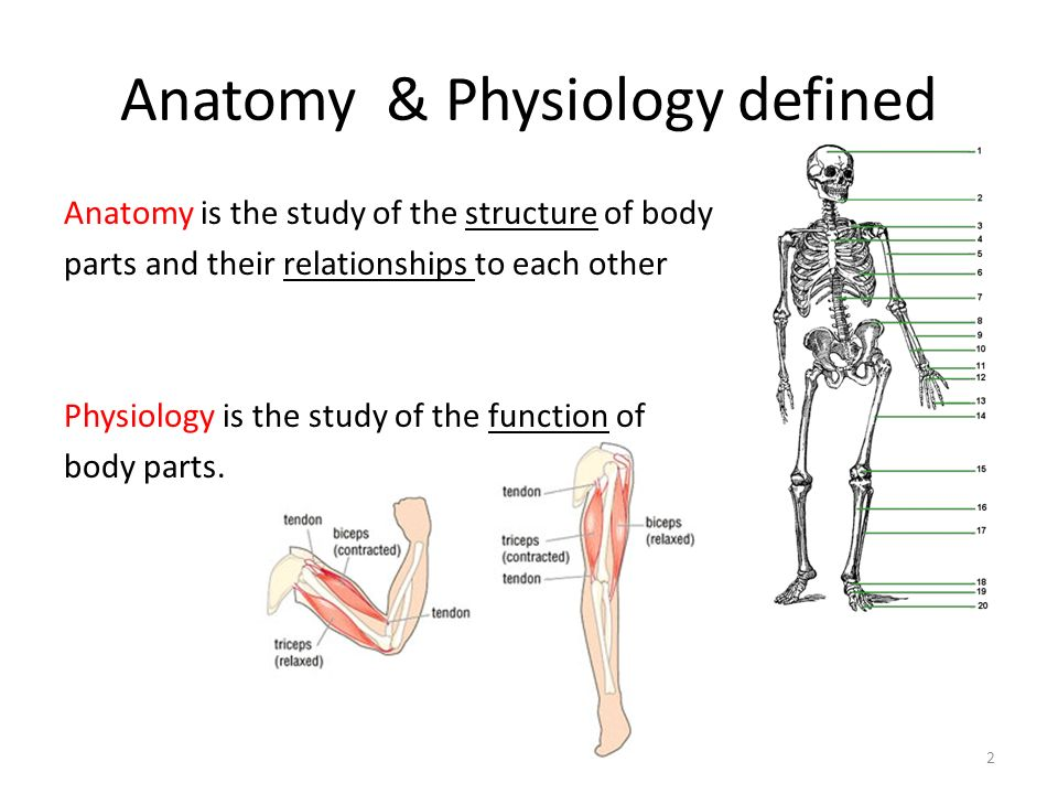 Introduction To Human Anatomy Physiology 1 Anatomy Physiology