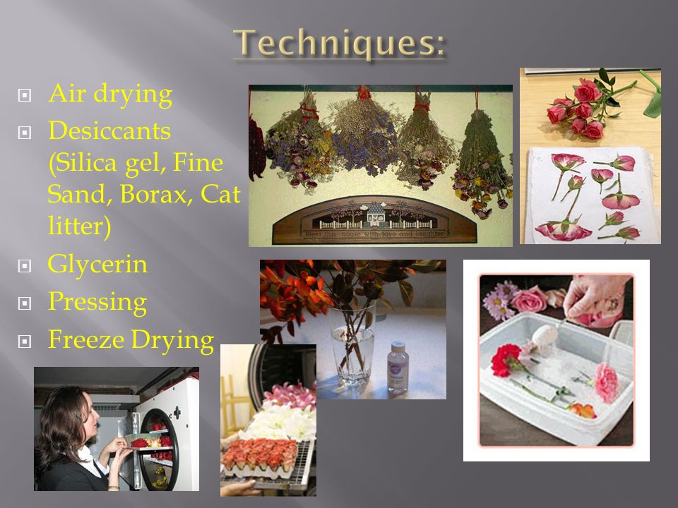 Freeze Drying Flowers With Silica Gel - Flowers Healthy