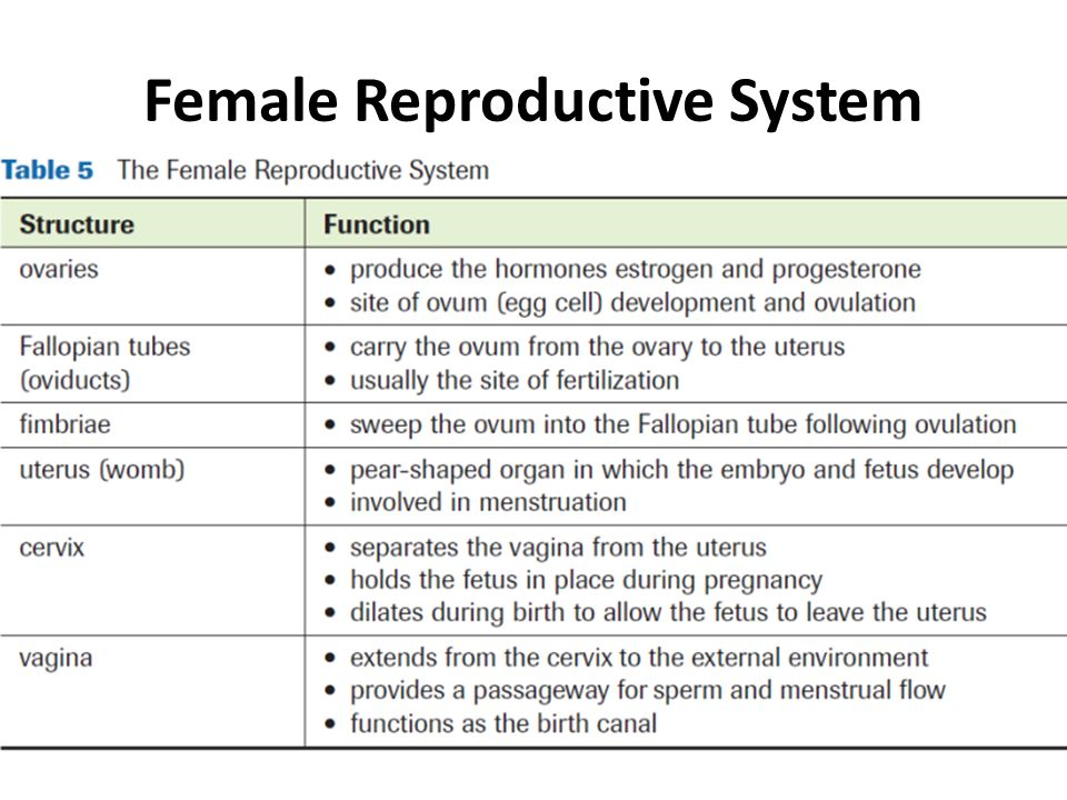 Part 2b The Female Reproductive System Hormones Ppt Download