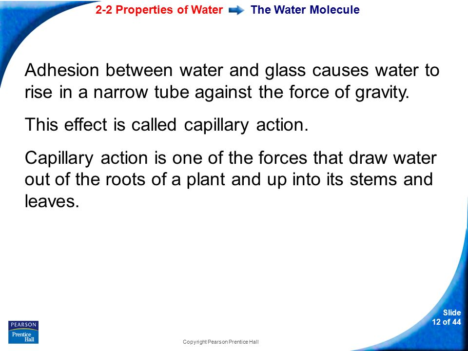 2-2 Properties of Water Slide 12 of 44 Copyright Pearson Prentice Hall The Water Molecule Adhesion between water and glass causes water to rise in a narrow tube against the force of gravity.