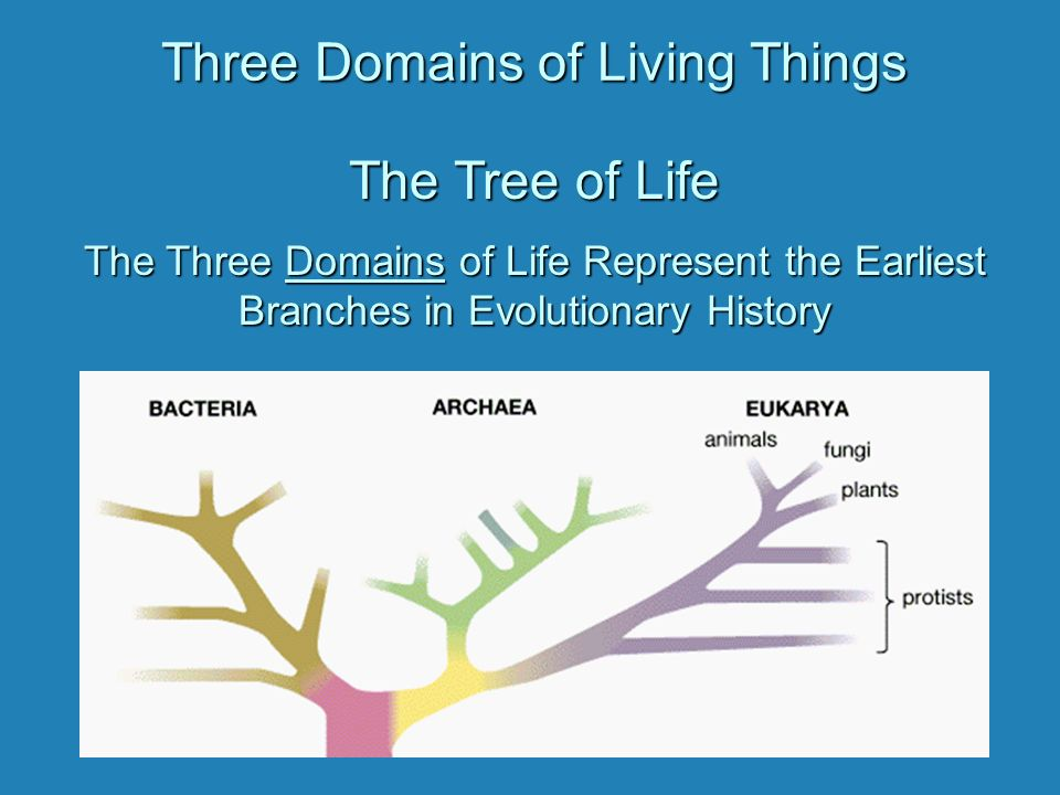 Diversity Three Domains Of Living Things The Tree Of Life The Three