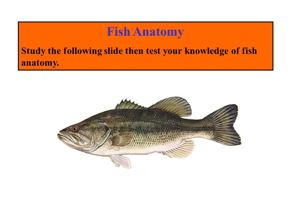 Aquaculture Facts, Fish Anatomy and Identification Issued in ...