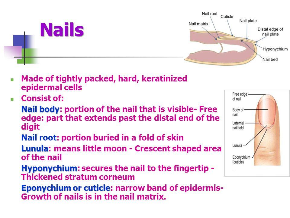 Funky Nail Anatomy And Physiology Embellishment - Nail Art Ideas ...