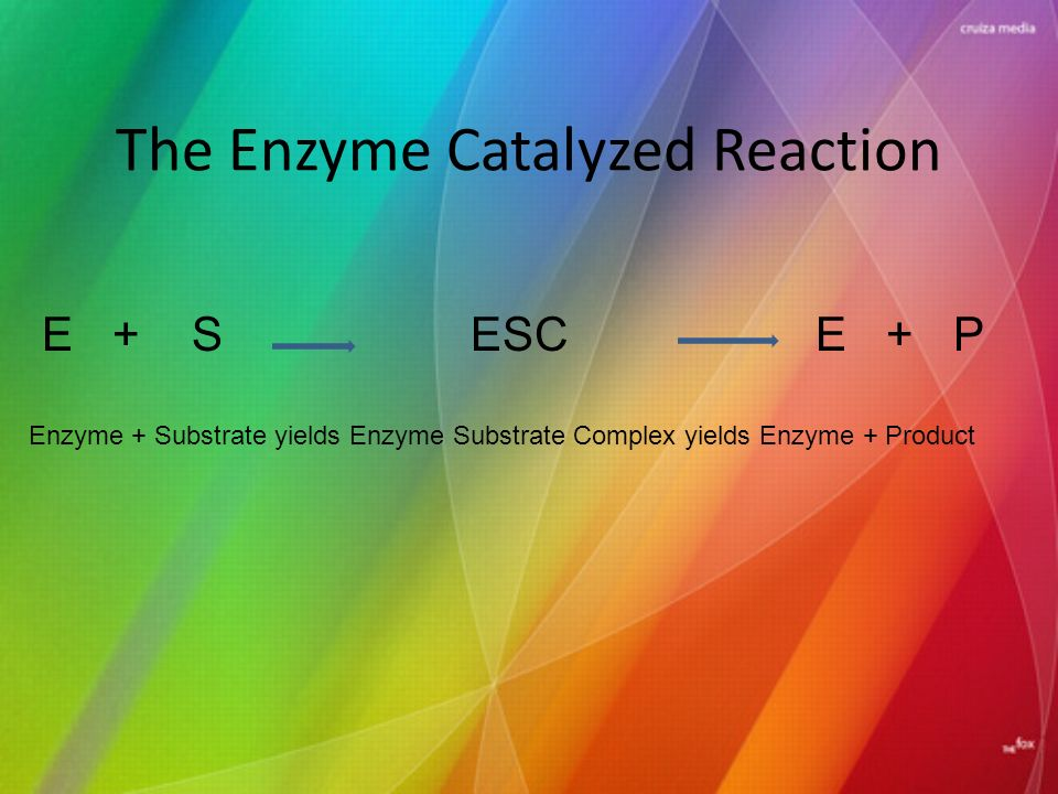 The Enzyme Catalyzed Reaction E + S ESC E + P Enzyme + Substrate yields Enzyme Substrate Complex yields Enzyme + Product