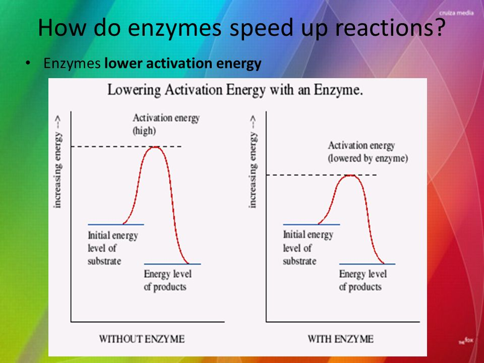 How do enzymes speed up reactions Enzymes lower activation energy