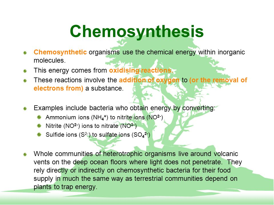 some organisms use chemosynthesis to survive Some microorganisms derive energy from chemical reactions that don't require light and use this energy to assemble organic molecules through a process called chemosynthesis these organisms are called chemolithoautotrophs or simply chemoautotrophs.