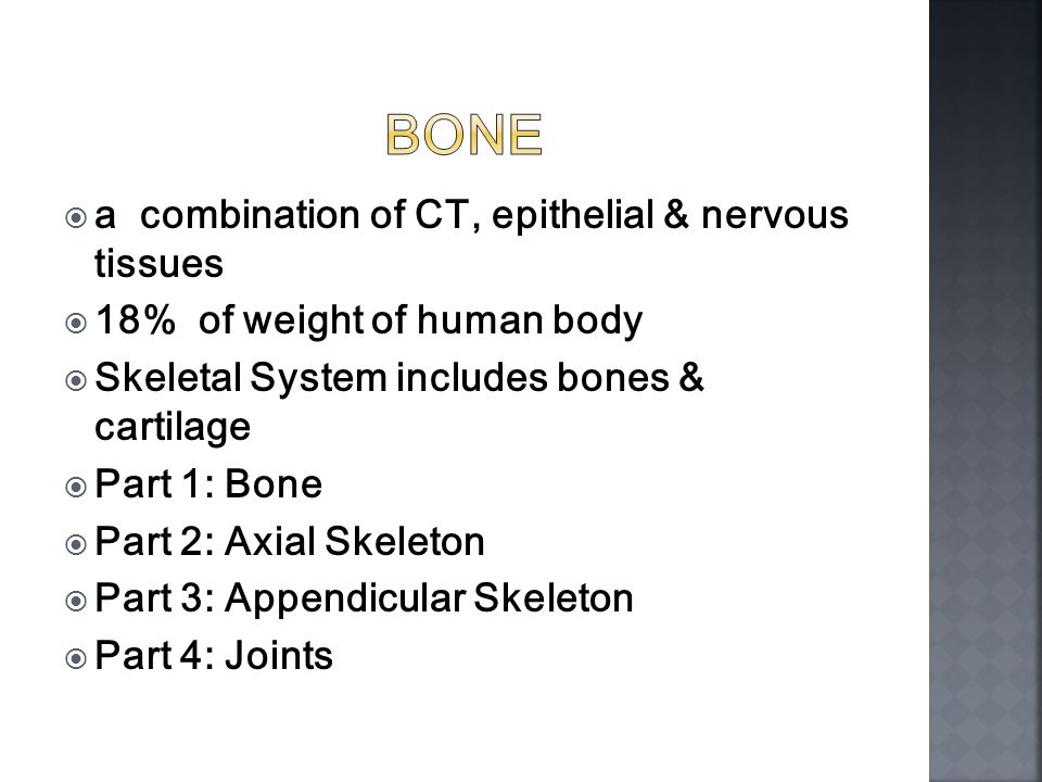 Honors Anatomy & Physiology.  a combination of CT, epithelial ...
