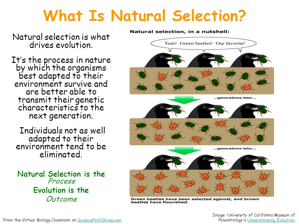 Natural selection is what drives evolution.