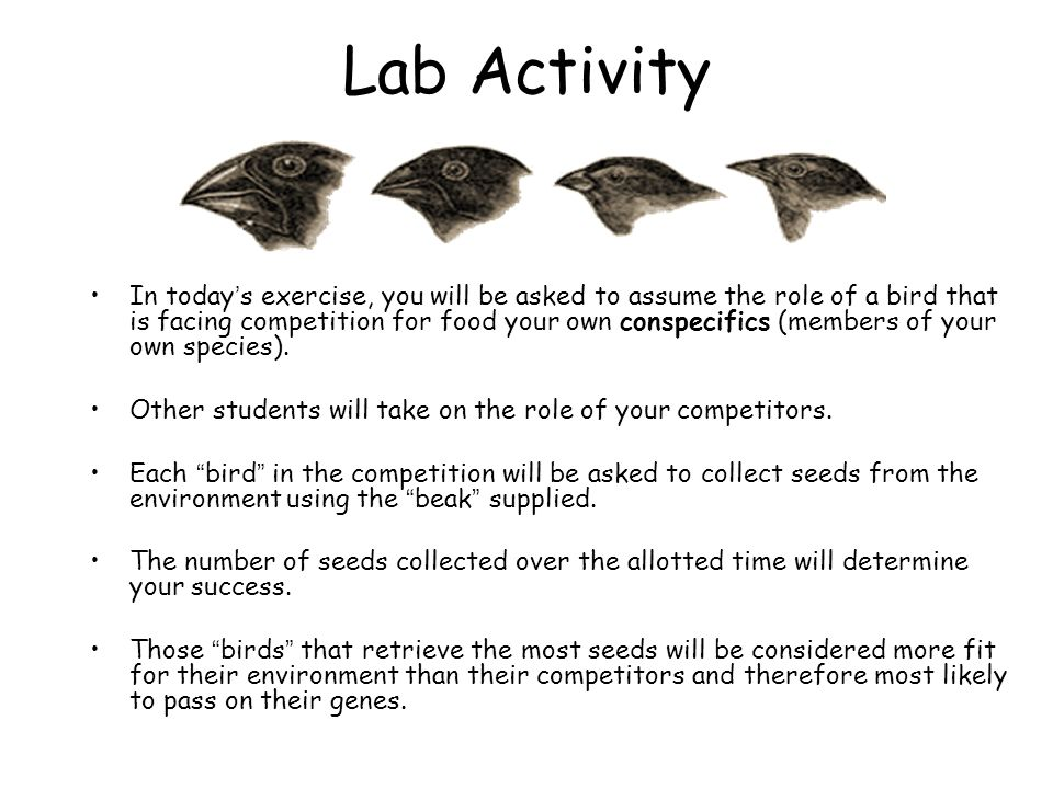 Lab Activity In today's exercise, you will be asked to assume the role of a bird that is facing competition for food your own conspecifics (members of your own species).