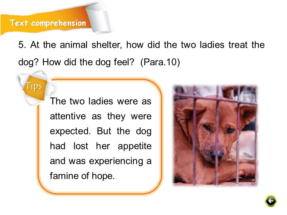 5. At the animal shelter, how did the two ladies treat the dog.