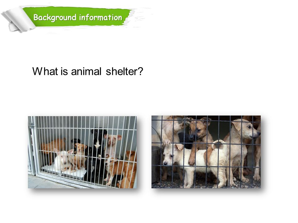 What is animal shelter