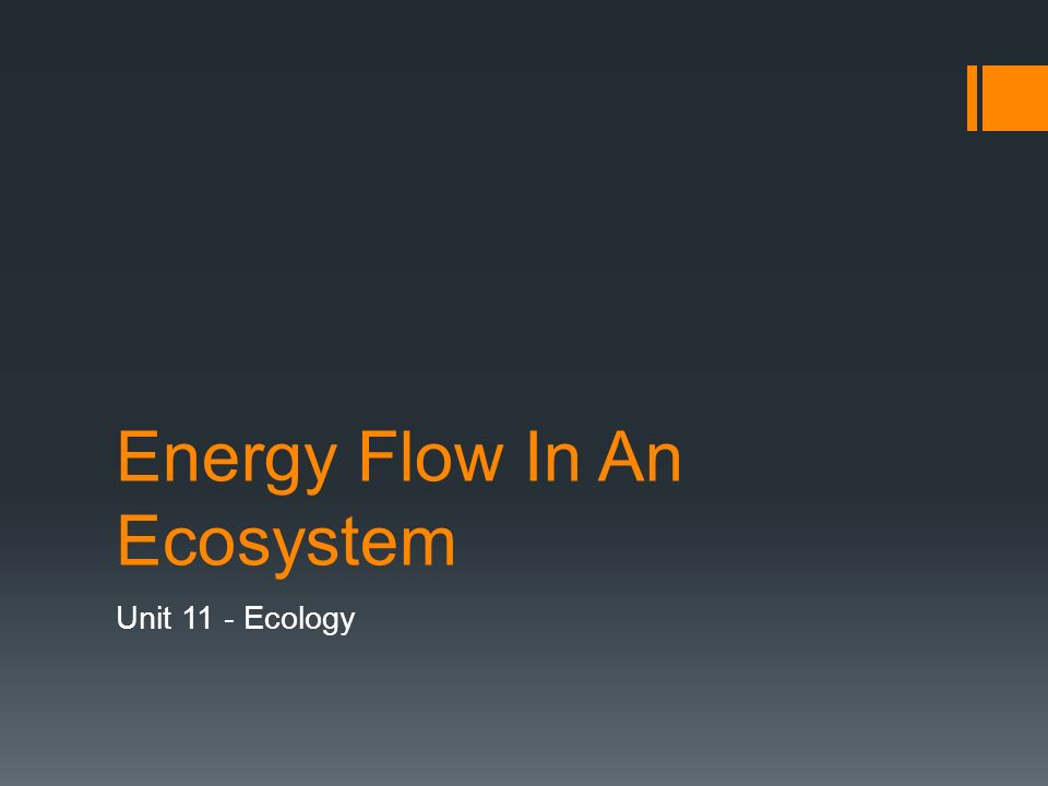 Energy Flow In An Ecosystem Unit 11 - Ecology