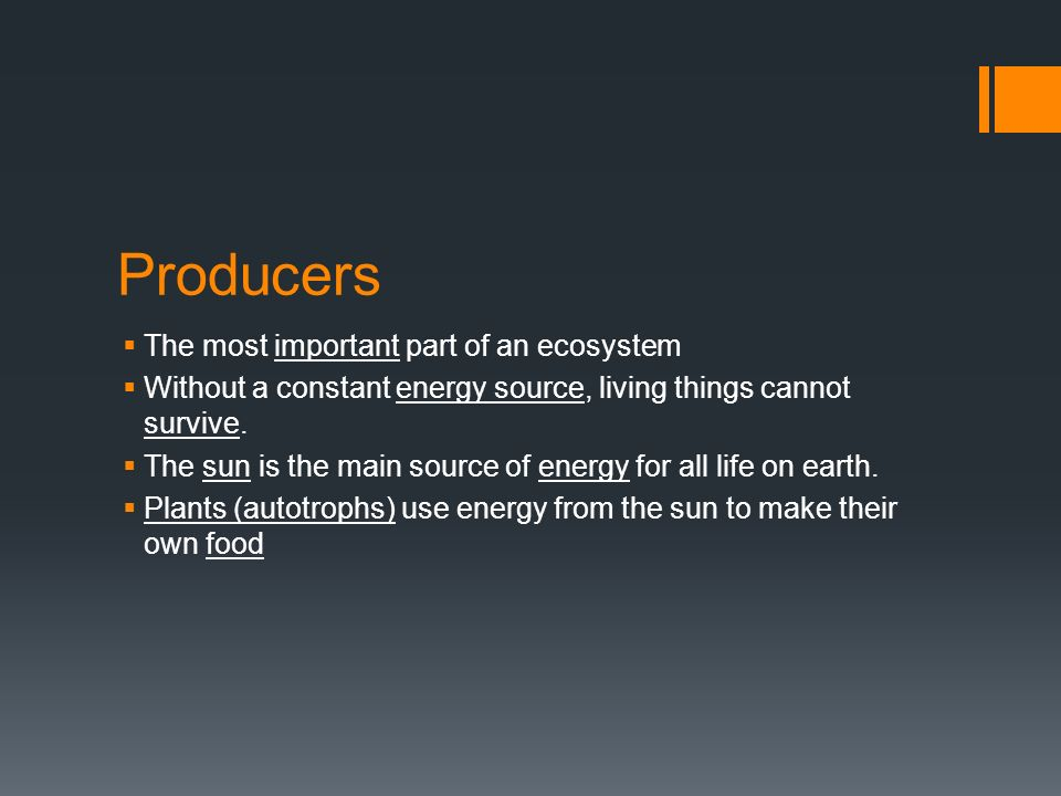 Producers  The most important part of an ecosystem  Without a constant energy source, living things cannot survive.