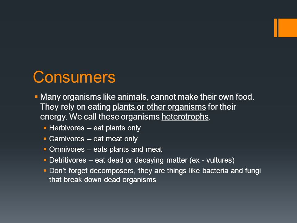 Consumers  Many organisms like animals, cannot make their own food.