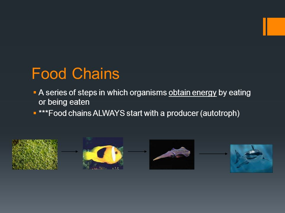 Food Chains  A series of steps in which organisms obtain energy by eating or being eaten  ***Food chains ALWAYS start with a producer (autotroph)