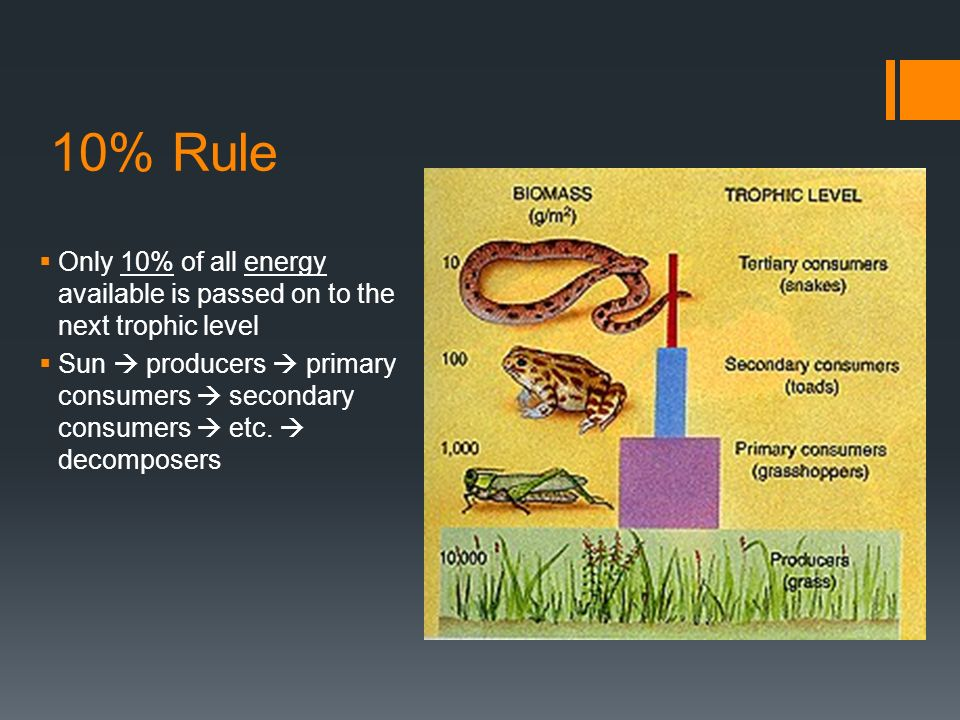 10% Rule  Only 10% of all energy available is passed on to the next trophic level  Sun  producers  primary consumers  secondary consumers  etc.