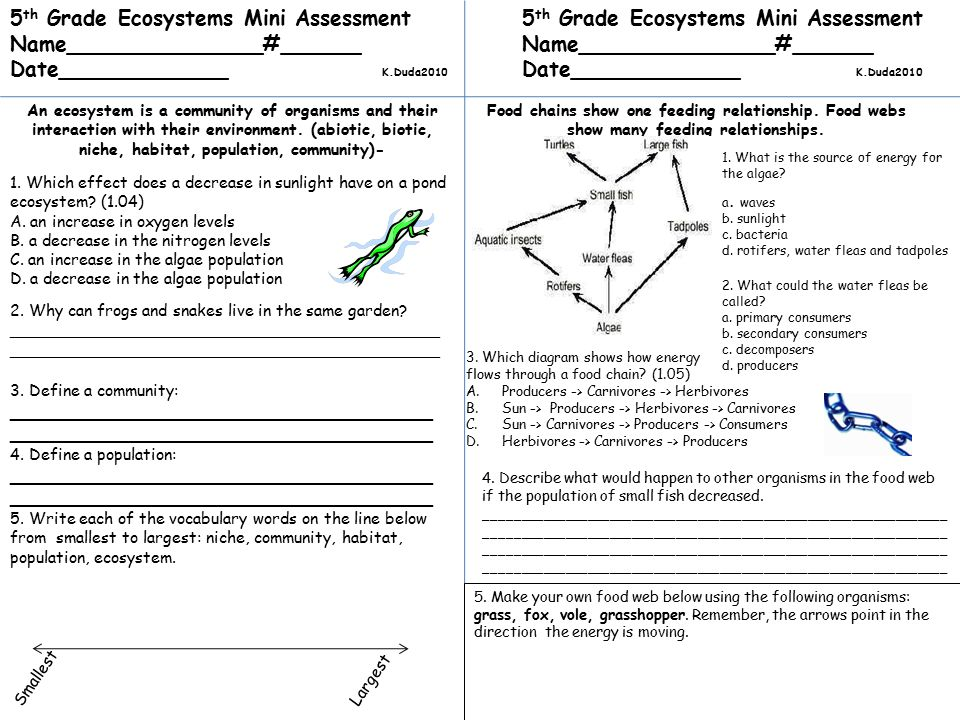 4th Grade Ecosystem Diagram Diy Enthusiasts Wiring Diagrams