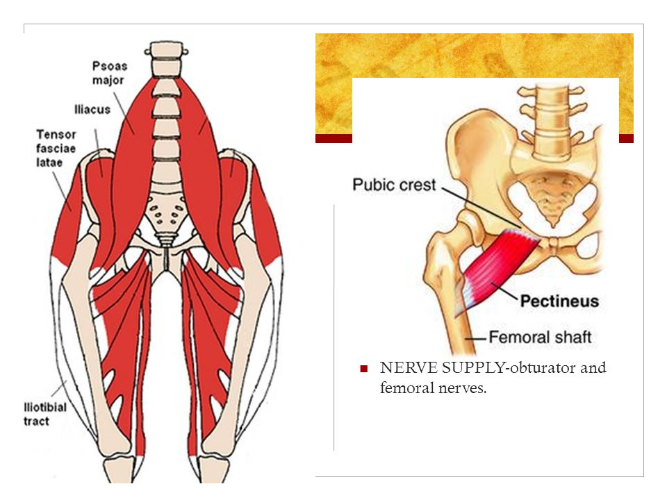 Muscles On Thigh Hands And Feet By Annie Jeehyun Jean Ppt Download