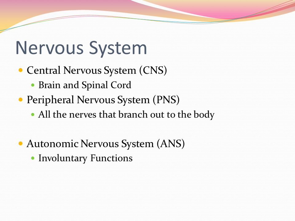 Chapter 8. The Nervous System The system of cells, tissues, and ...
