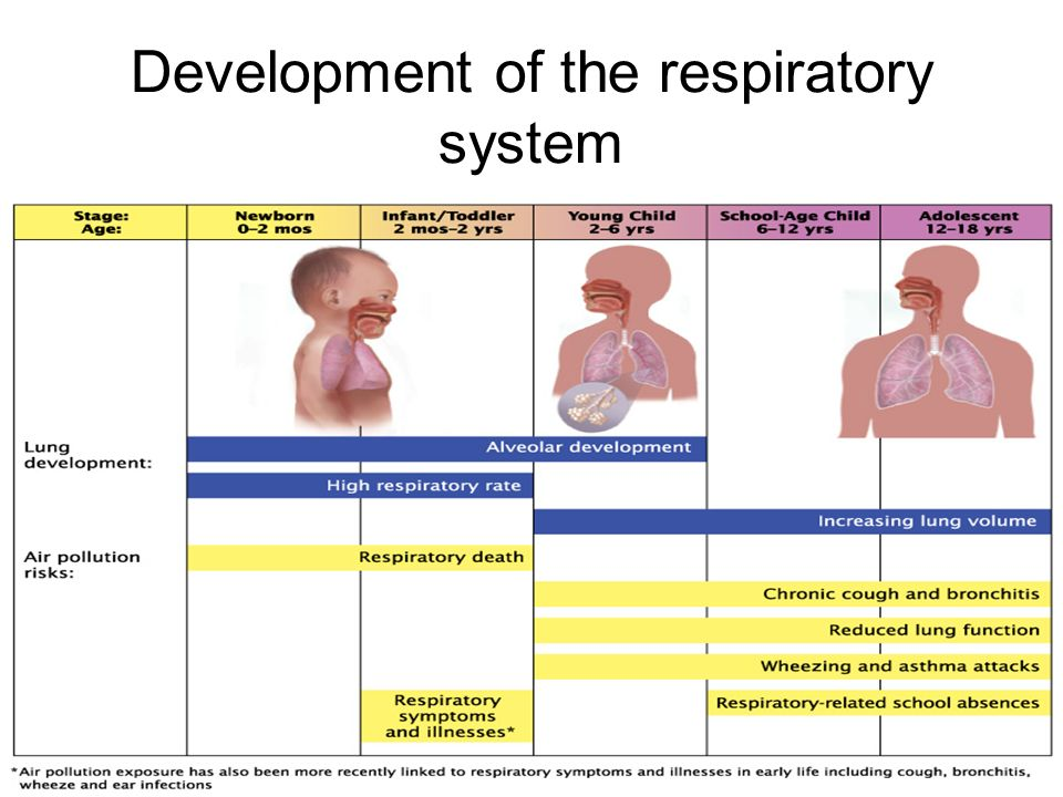 Respiratory System: Anatomical and Physiological differences between ...
