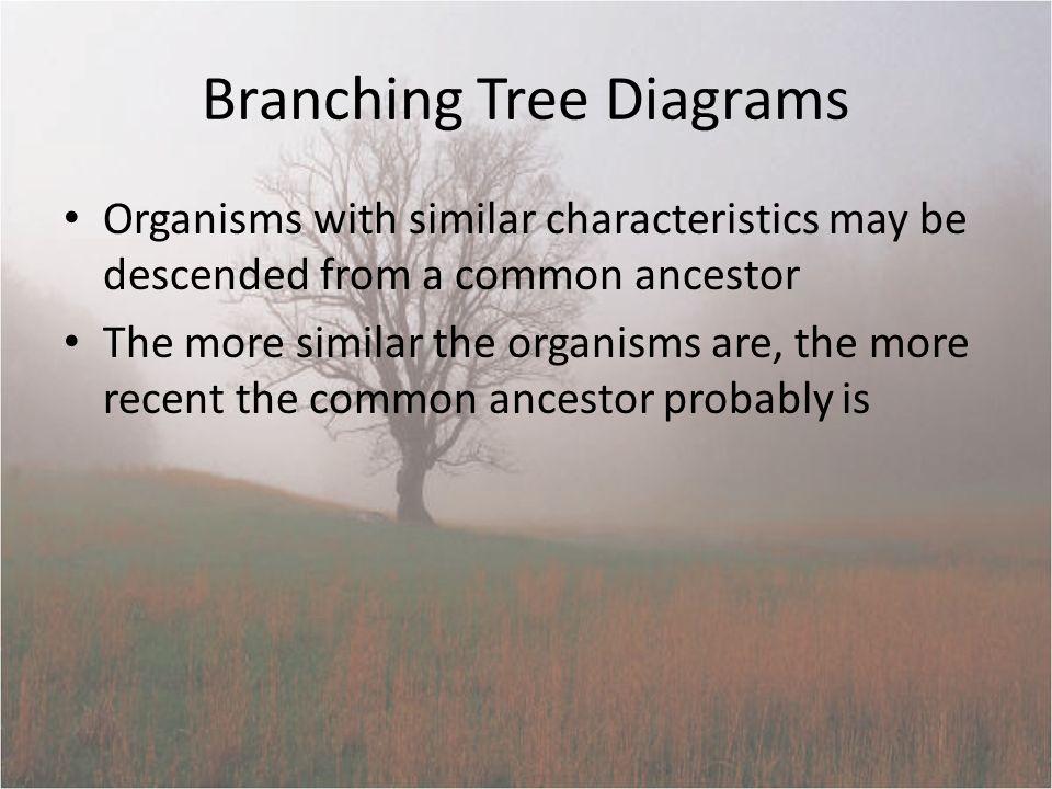 Notes 7 5 Branching Tree Diagrams Organisms With Similar