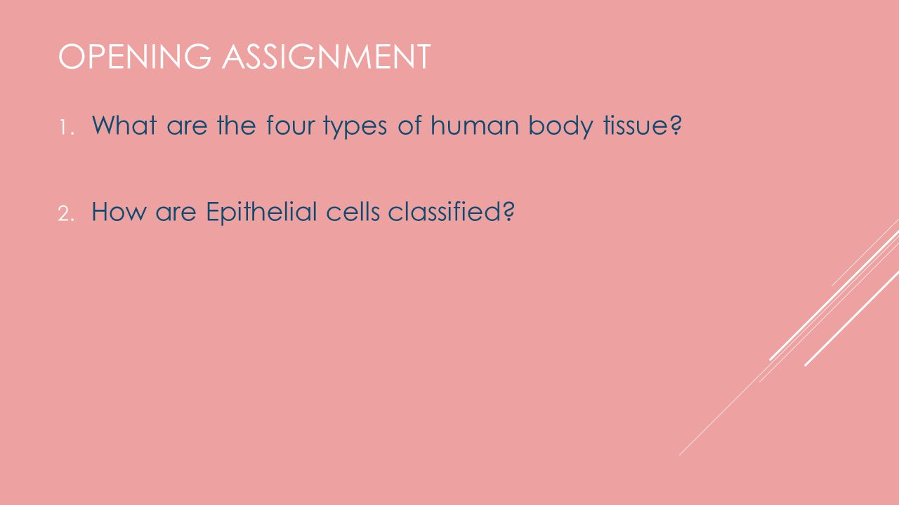 ANATOMY AND PHYSIOLOGY HONORS CHAPTER 5 TISSUES. INTRO TO TISSUES ...