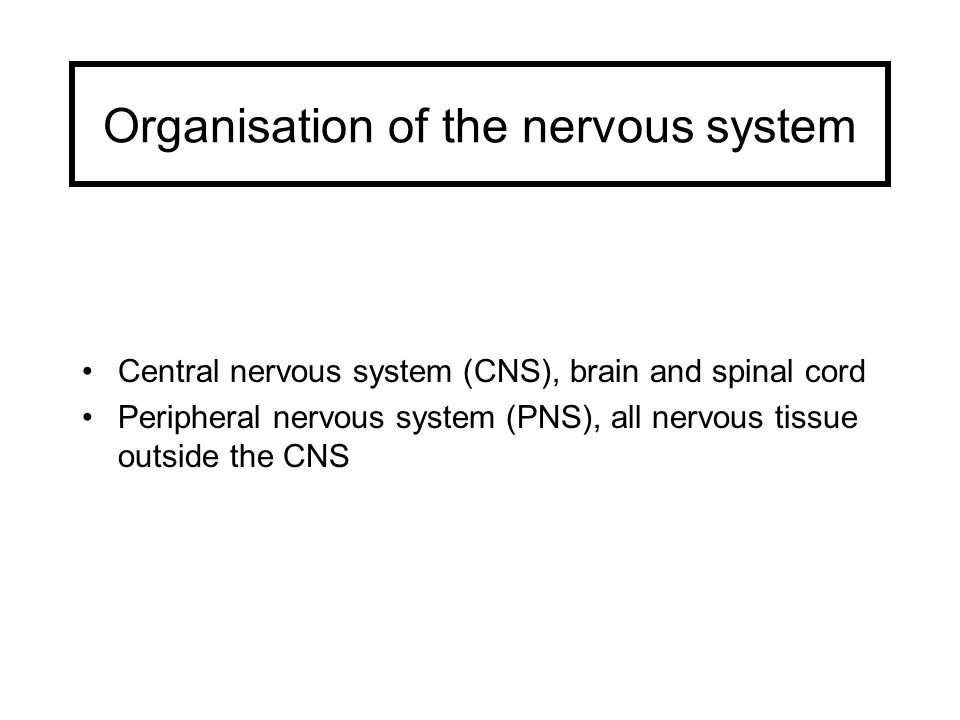 Functions Of The Nervous System The Nervous System Is Responsible