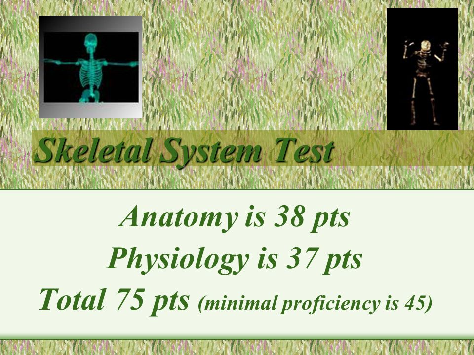 Skeletal System Test Skeletal System Test Anatomy Is 38 Pts