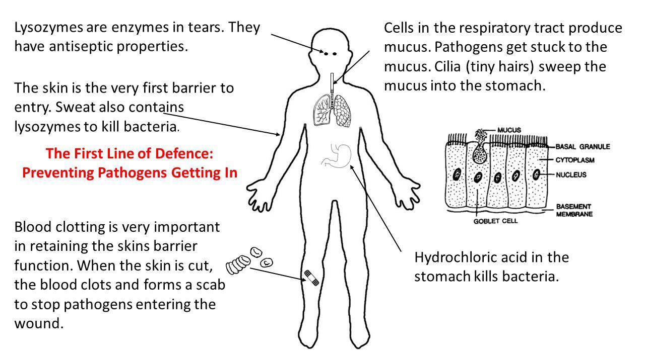Antibodies are the bodys defenses