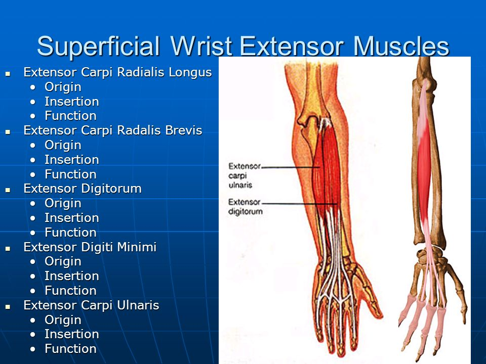 Chapters 16, 17, 18 Shoulder, Elbow, Wrist, and Hand. - ppt download