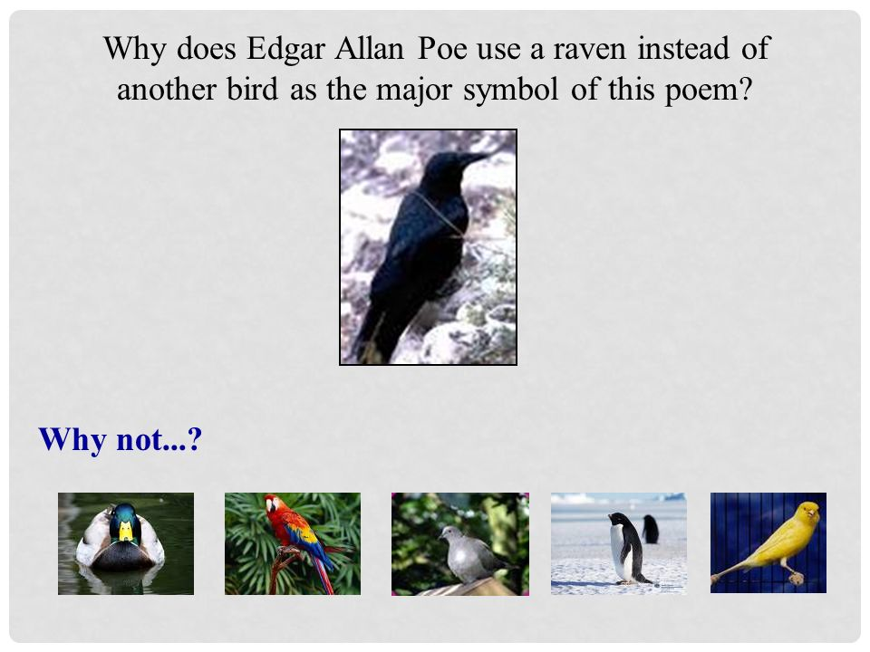 Understanding Symbolism And Mood The Raven Mood And Symbolism In