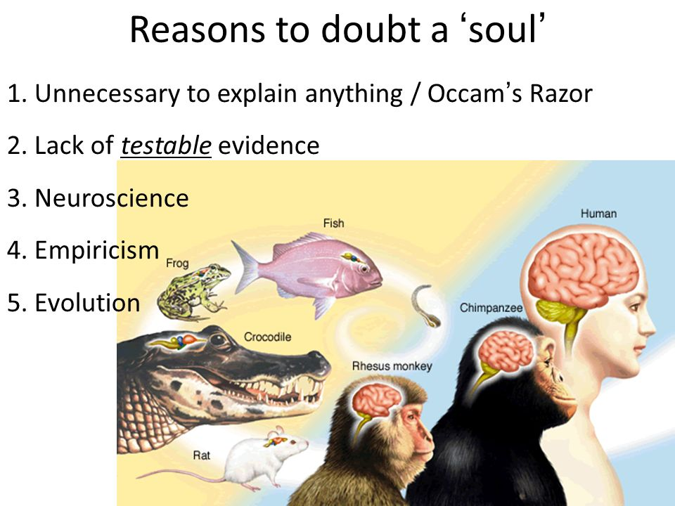 materialism mind brain identity reductionism soft materialism