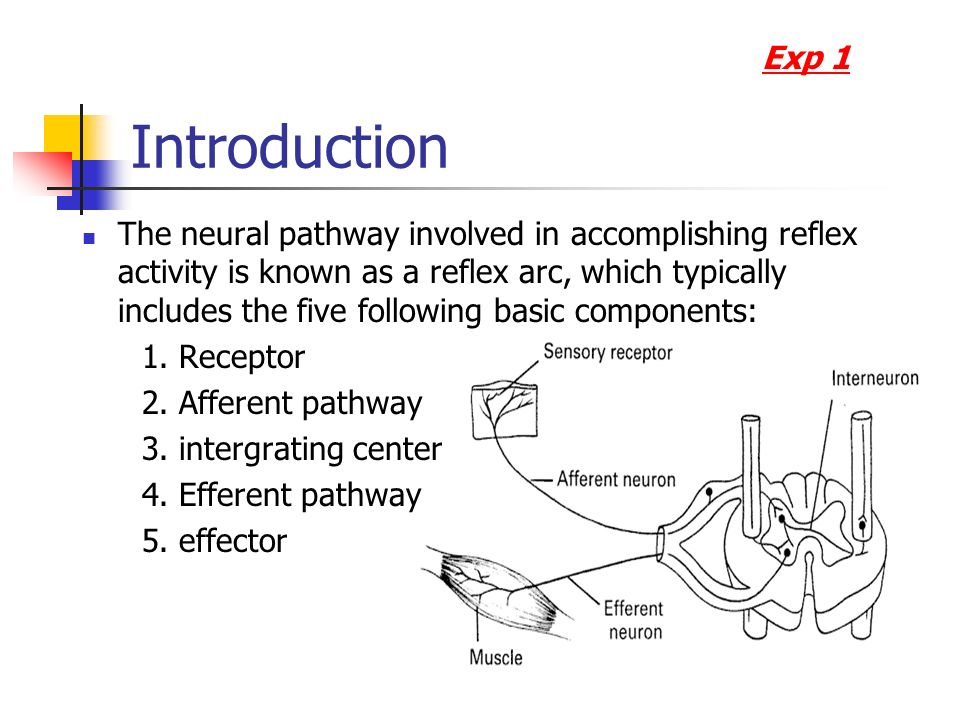 neural pathway specificity for music processing essay Imaging studies will be crucial to indicate the contribution of ventral visual regions to dorsal stream processing  these short, critical reviews of recent papers in the journal,  separate neural pathways for the visual analysis of object shape in perception and prehension.