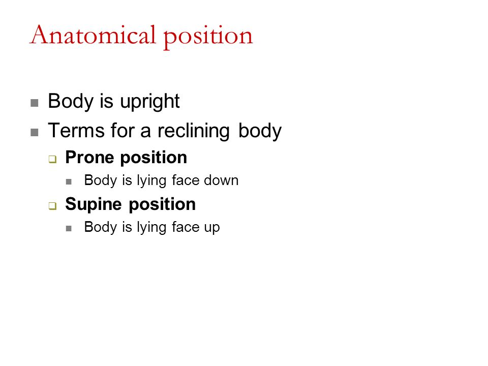 Modern Definition Of Supine In Anatomy Gift Anatomy And Physiology