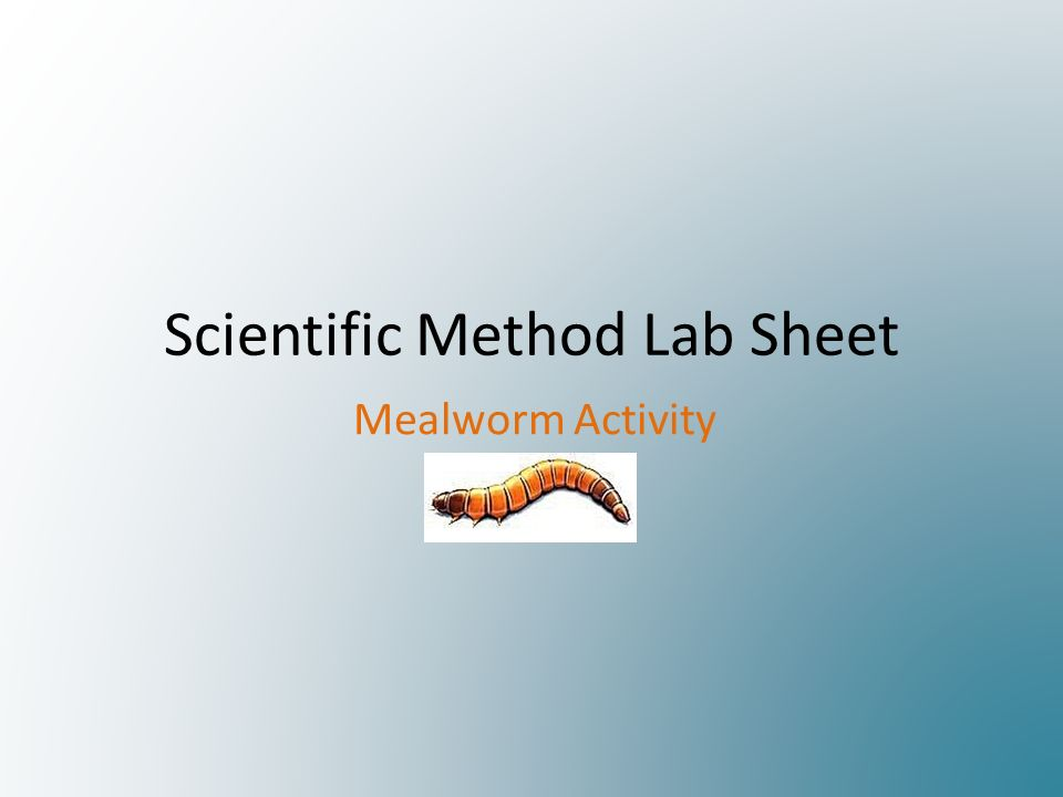 Scientific Method Lab Sheet Mealworm Activity