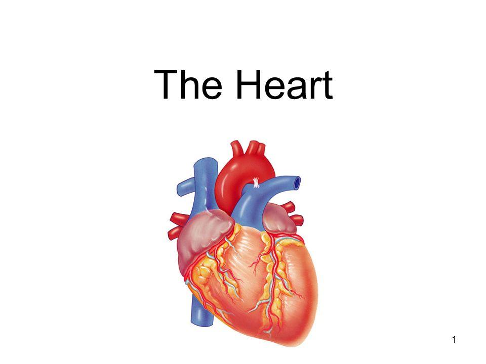 1 The Heart. Heart Anatomy & Basic Function (1) Cardiovascular ...