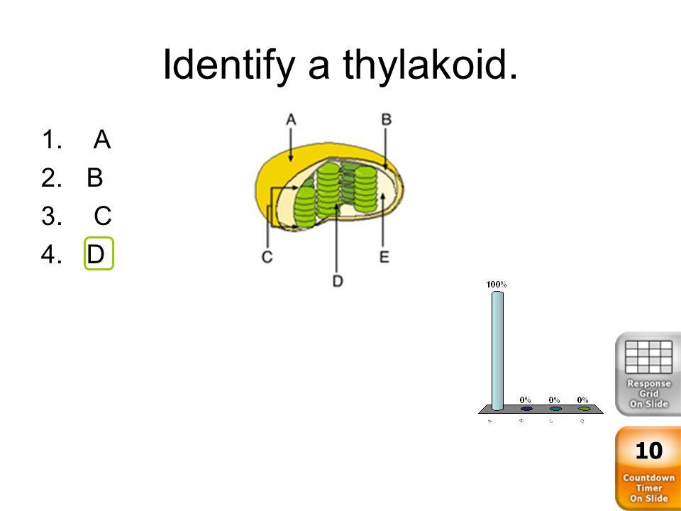 6 Identify A Thylakoid 1 2B 3 C 4D 10