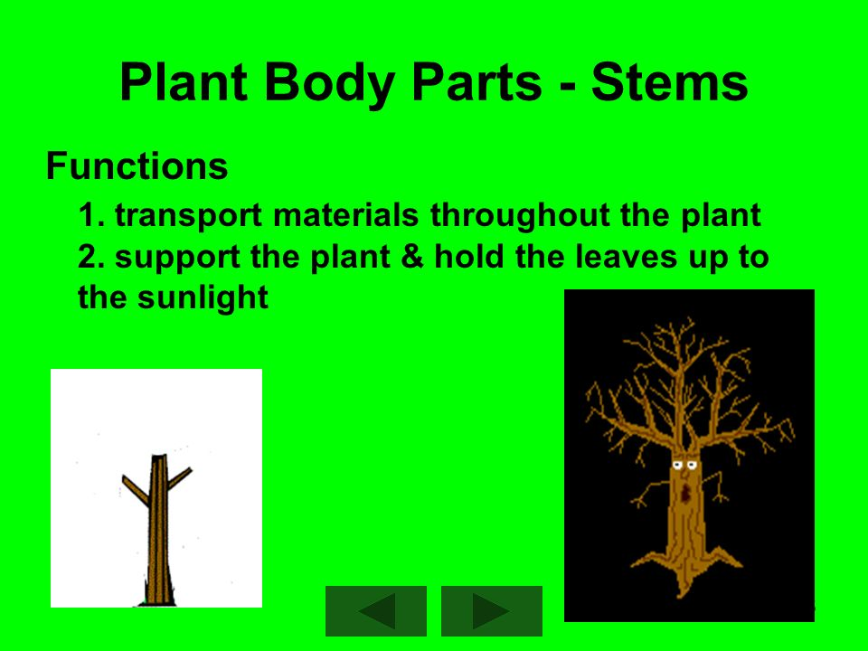 1 Characteristics That All Plants Have in Common : Eukaryotic ...