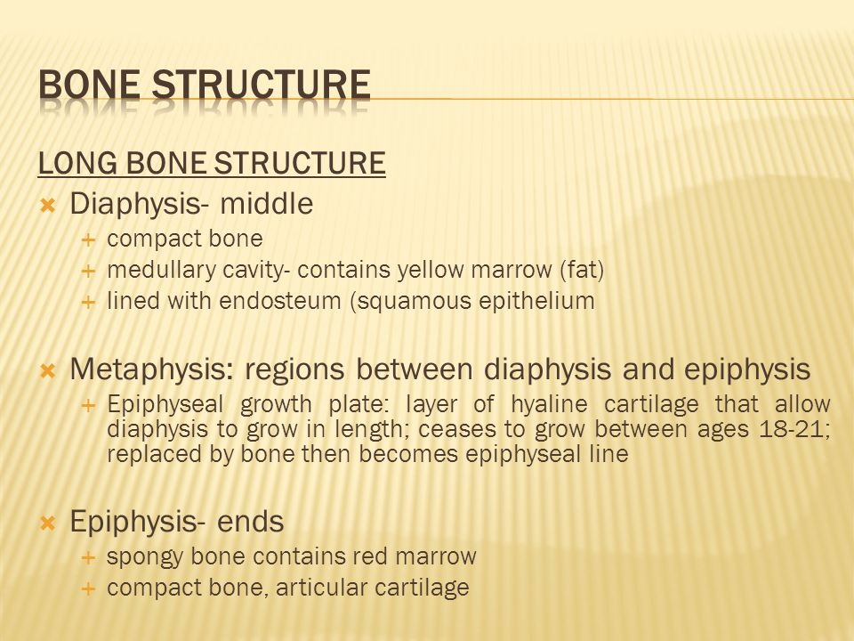 Bone Function And Structure Histology Of Bone Tissue Bone
