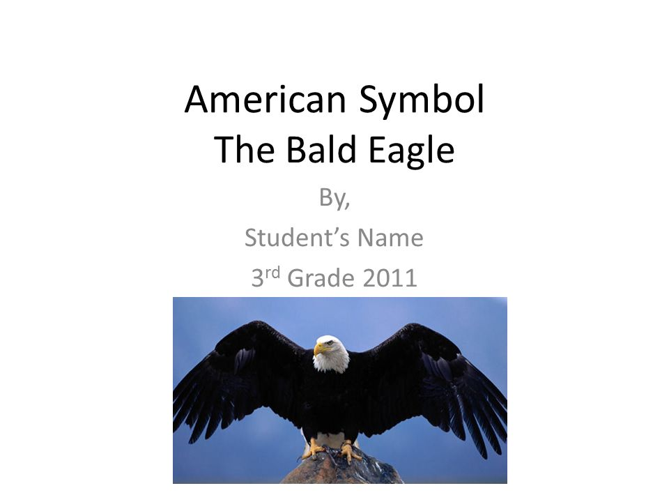 American Symbol The Bald Eagle By Students Name 3 Rd Grade Ppt