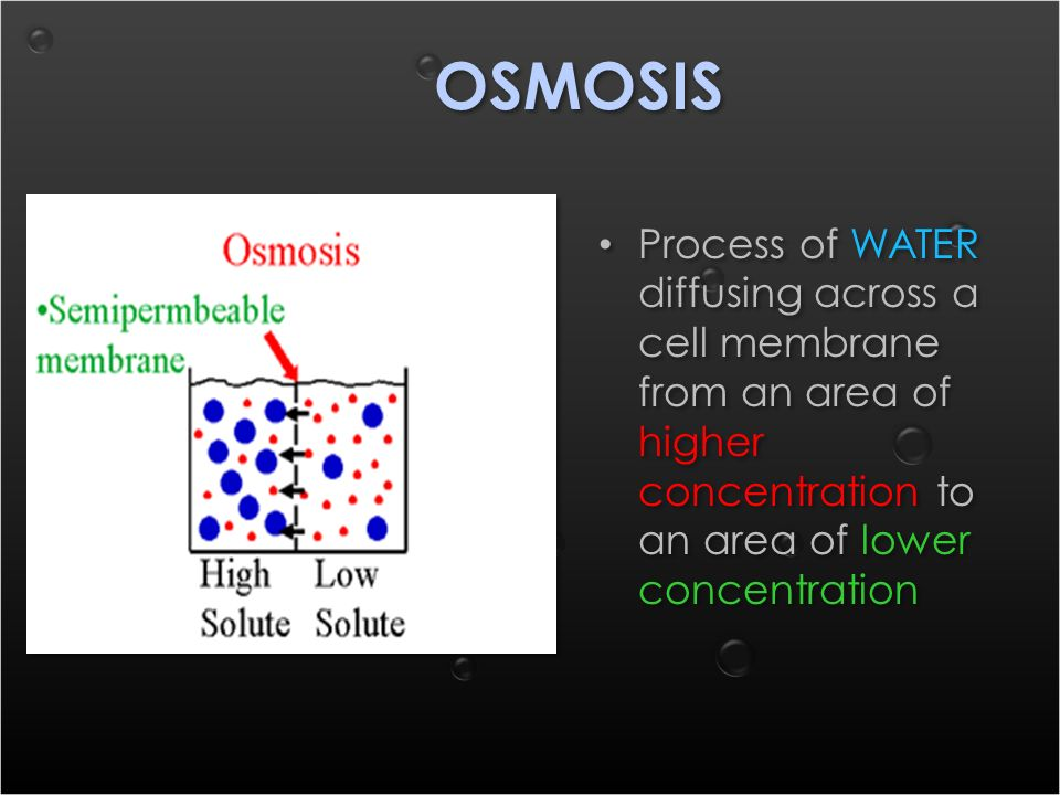 OSMOSIS Process of WATER diffusing across a cell membrane from an area of higher concentration to an area of lower concentration