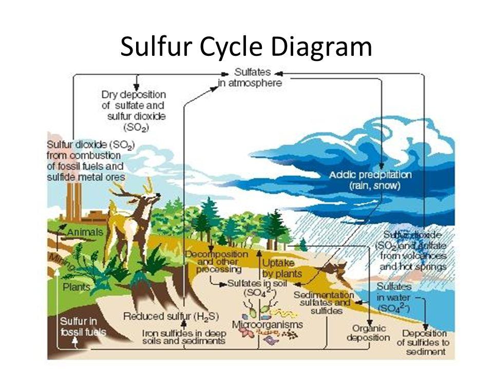 22 sulfur cycle diagram