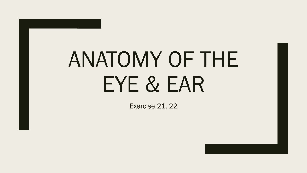 ANATOMY OF THE EYE & EAR Exercise 21, 22. THE EYE. - ppt download