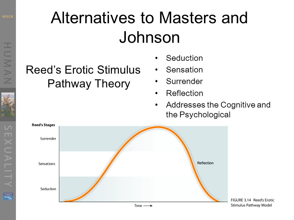 Alternatives to Masters and Johnson Reed's Erotic Stimulus Pathway Theory Seduction Sensation Surrender Reflection Addresses the Cognitive and the Psychological
