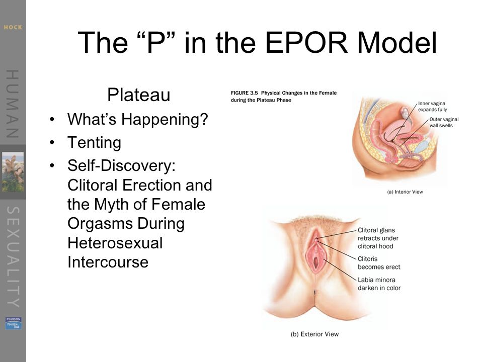 The P in the EPOR Model Plateau What's Happening.