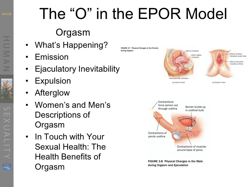 The O in the EPOR Model Orgasm What's Happening.