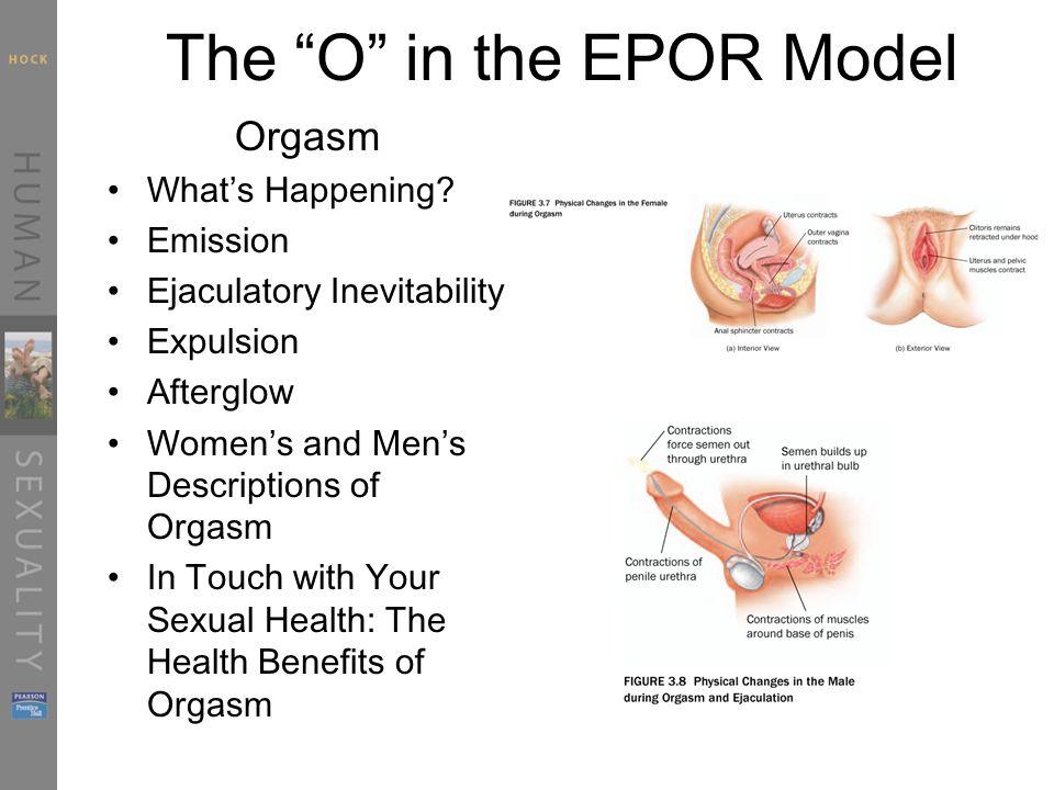 Pdf Evolutionary Science Of Female Orgasm