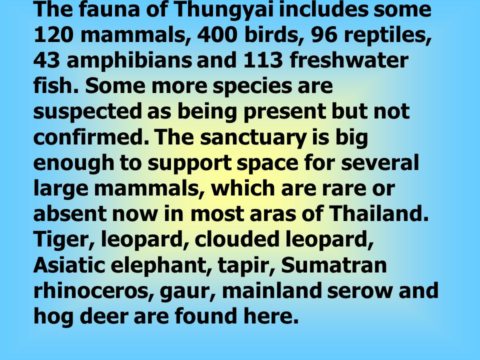 Fauna The fauna of Thungyai includes some 120 mammals, 400 birds, 96 reptiles, 43 amphibians and 113 freshwater fish.