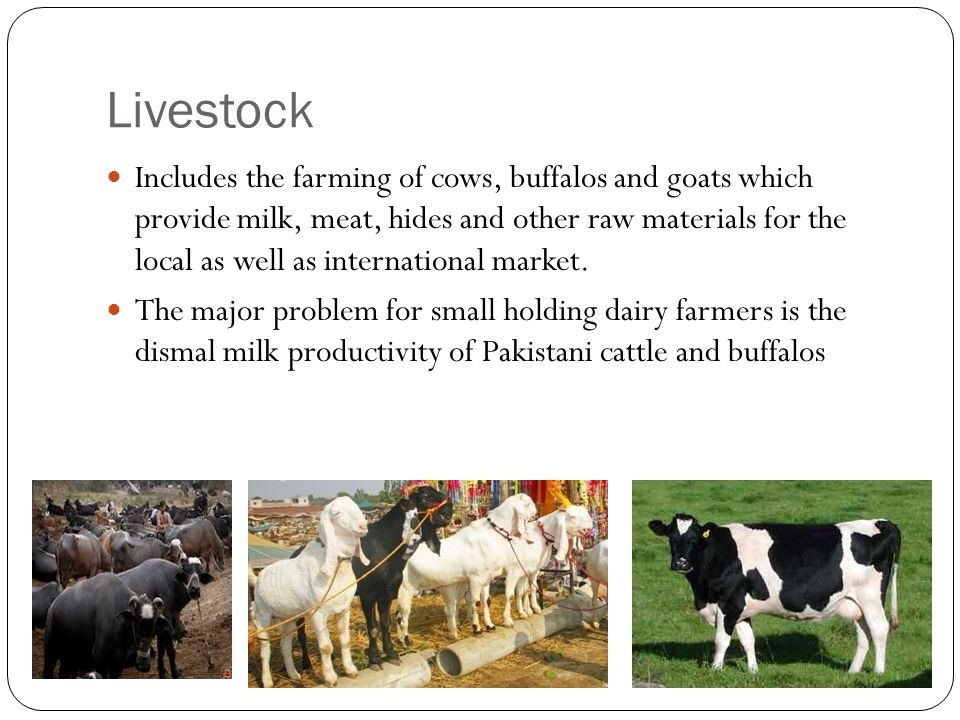 Livestock Includes the farming of cows, buffalos and goats which provide milk, meat, hides and other raw materials for the local as well as international market.